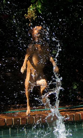 Zoe water bear
