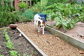 Simone in the veggies90_LR