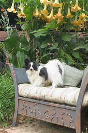 Zali on bench canopy of angel trumpet81_LR