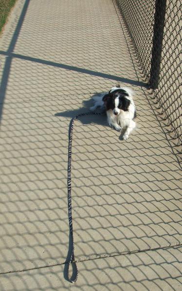 Zali sidewalk lying down w leash028_