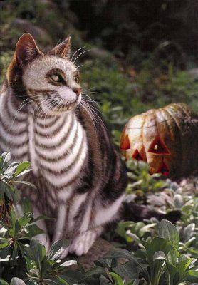 Holloween skeleton cat