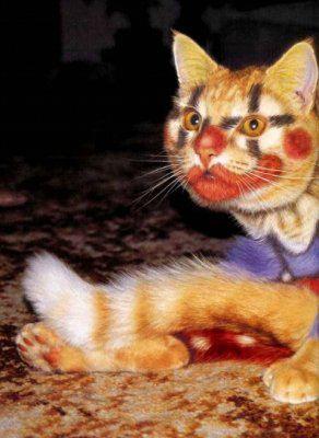 Holloween clown cat