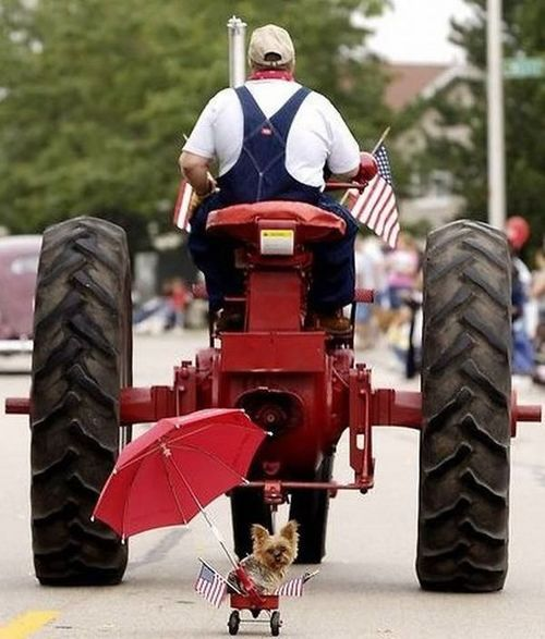 Holloween tractor pulling little dog
