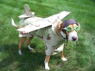 Holloween airplane dog011