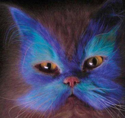 Holloween butterfly face cat