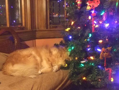 Carmen_asleep in the Xmas tree70