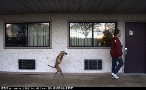 No leg dog walking with master003