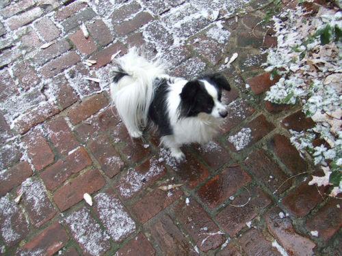 Snow zali082_zali