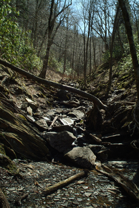 Gatlinburg dep holler with stream 2 52lr