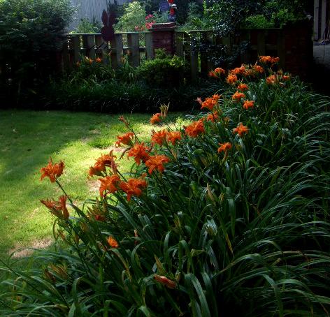 Liliesorangetowardveggarden837