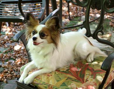 Simone happy on chair