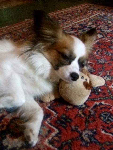 Simone head on toy sleeping