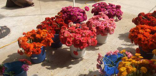 Farmer's market buckets of flowers