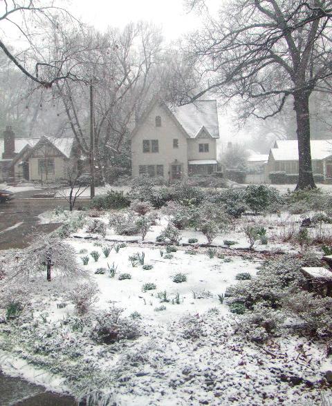 Snow349