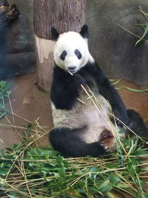 Zoo 2010 ya ya snacking