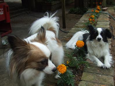 Zali and simone in the marigolds