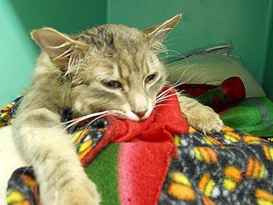 Bridge cat lives