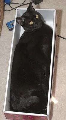 Cat in box 4