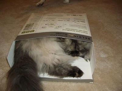 Cat in box 5