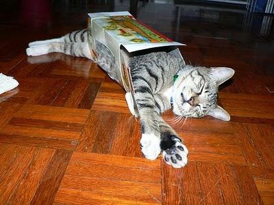 Cat in box 6