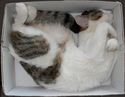Cat in box 7