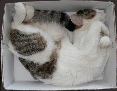 Cat in box 7