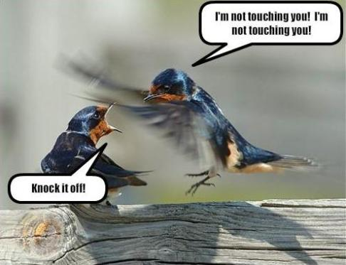 Birds touching funny
