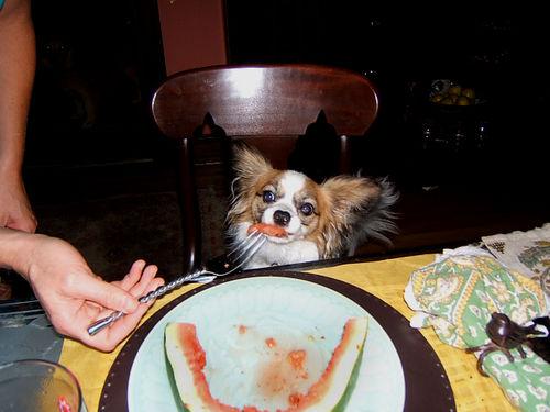 Simone eating Watermelon w fork