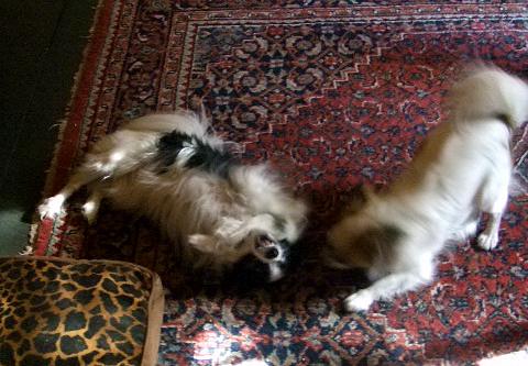 Zali simone playing on kitchen floor