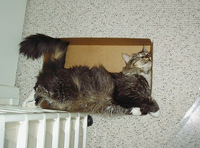 Cat in box 1