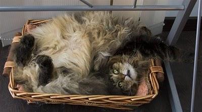 Cat in box 2