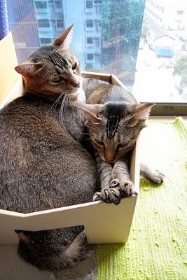 Cat in box 9