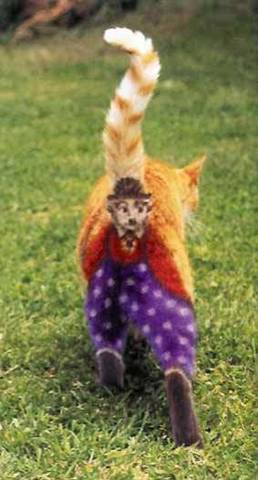 Halloween cat charlie chaplin
