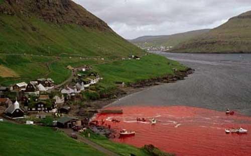 Faroe island red ocean