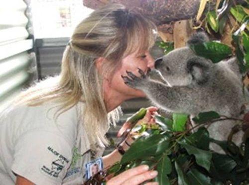Koala infant kiss