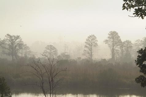 Fog 516