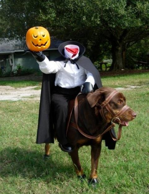 Halloween dog2