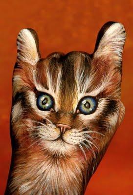 Hand kitten