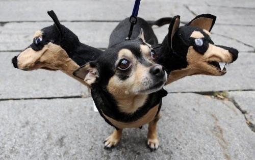 Halloween dog 1