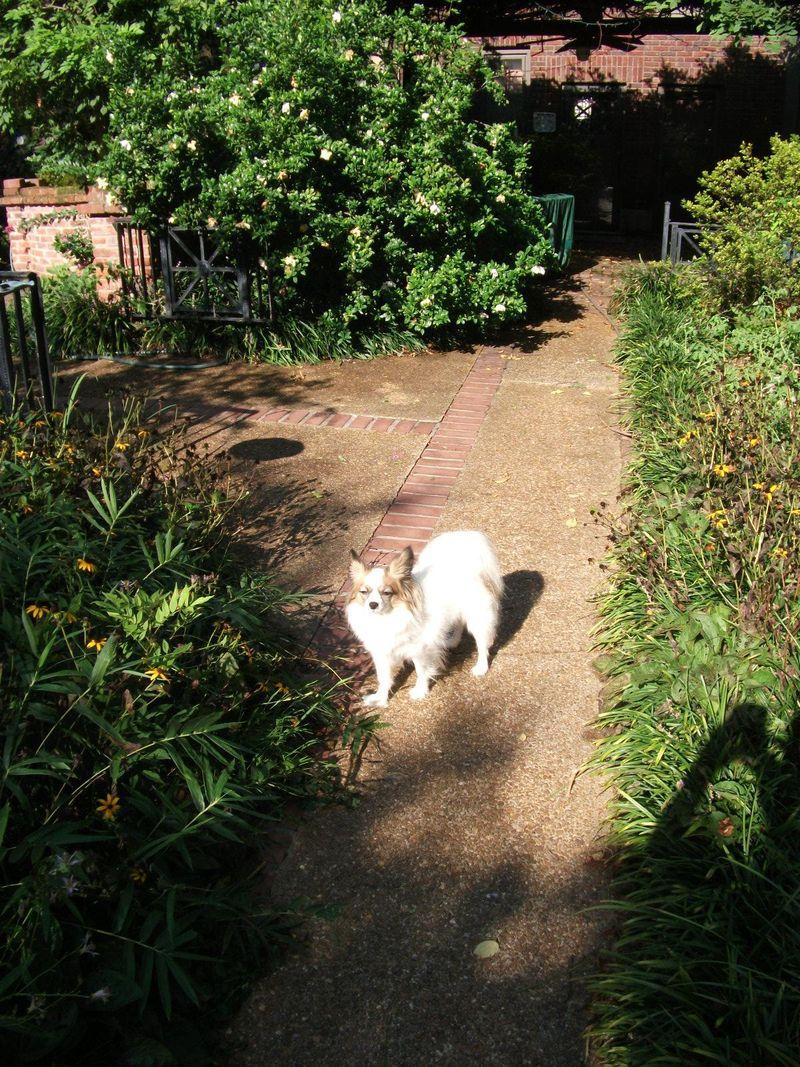 Zoe and backyard 010