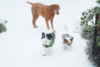 Zoe and kids in hte snow