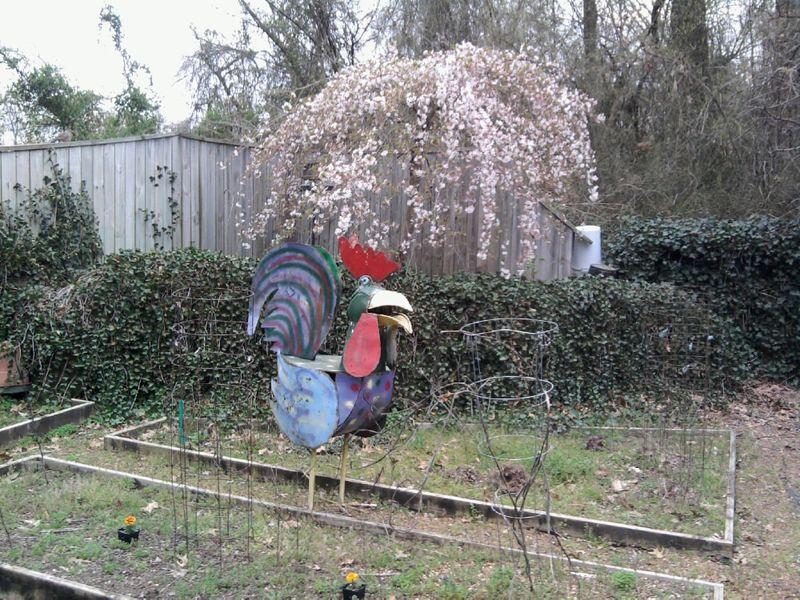 Garden schicken2