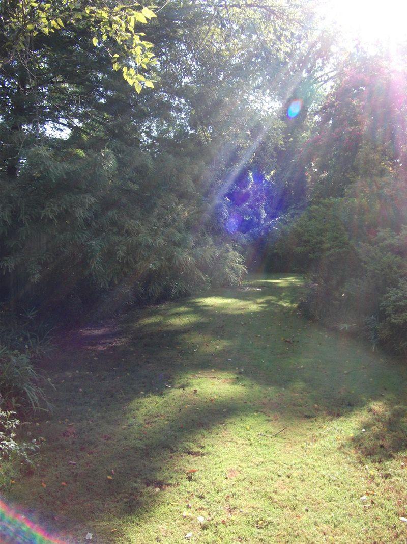 Zoe and backyard 006