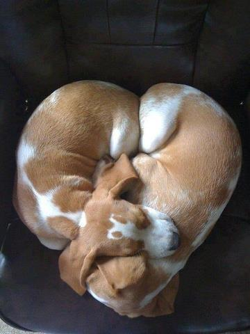 Valentine puppies