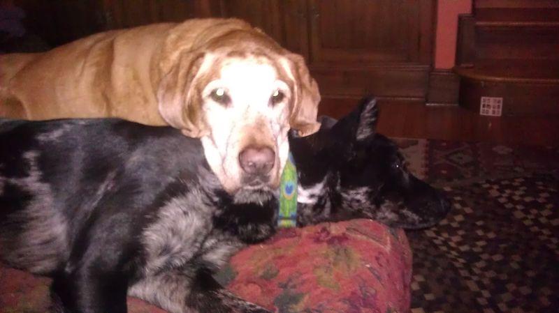 Zoe and Bou nap