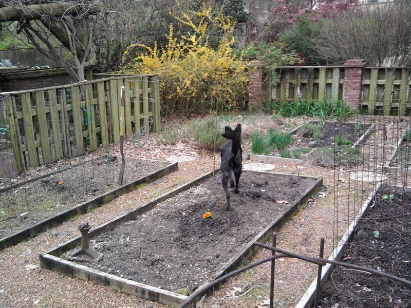 Garden bou