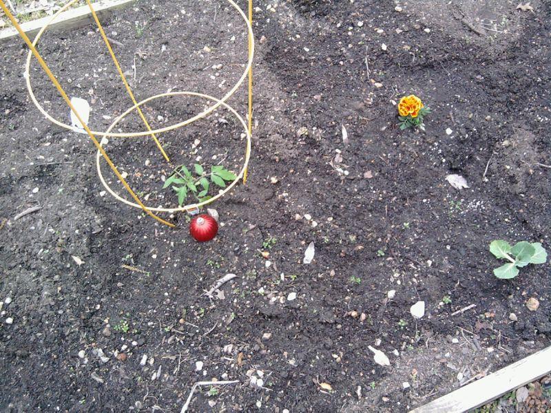 Garden new plantings