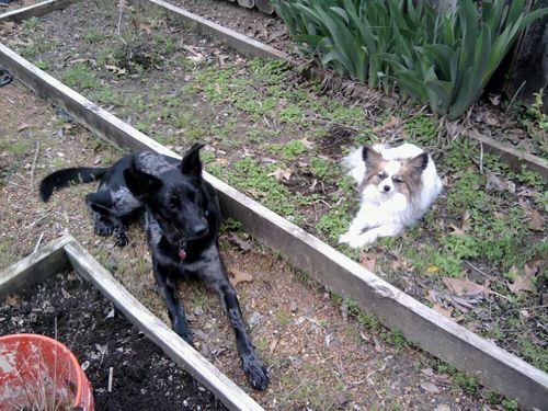 Garden bou and simone