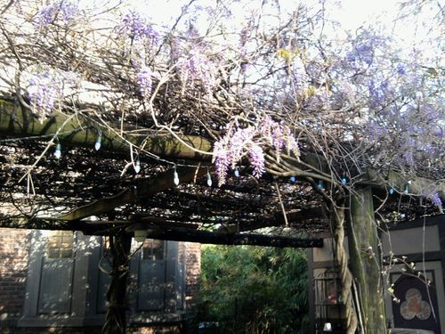 Wisteria patio
