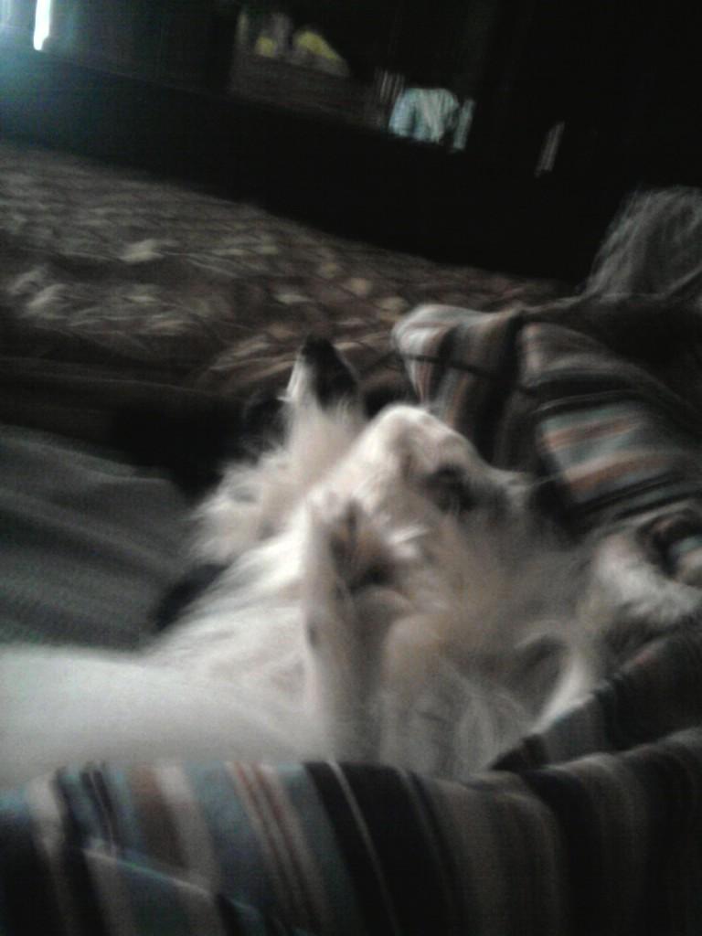 Zali sleeping